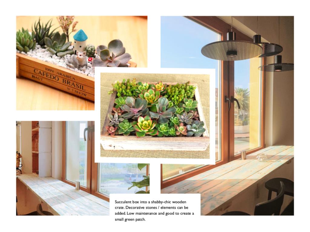 Succulent box for the Workshop Dubai