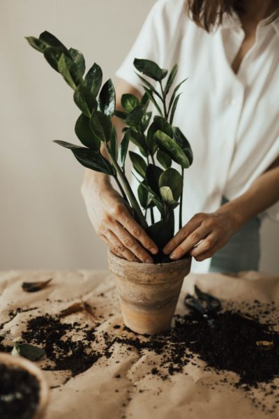 repot my plant