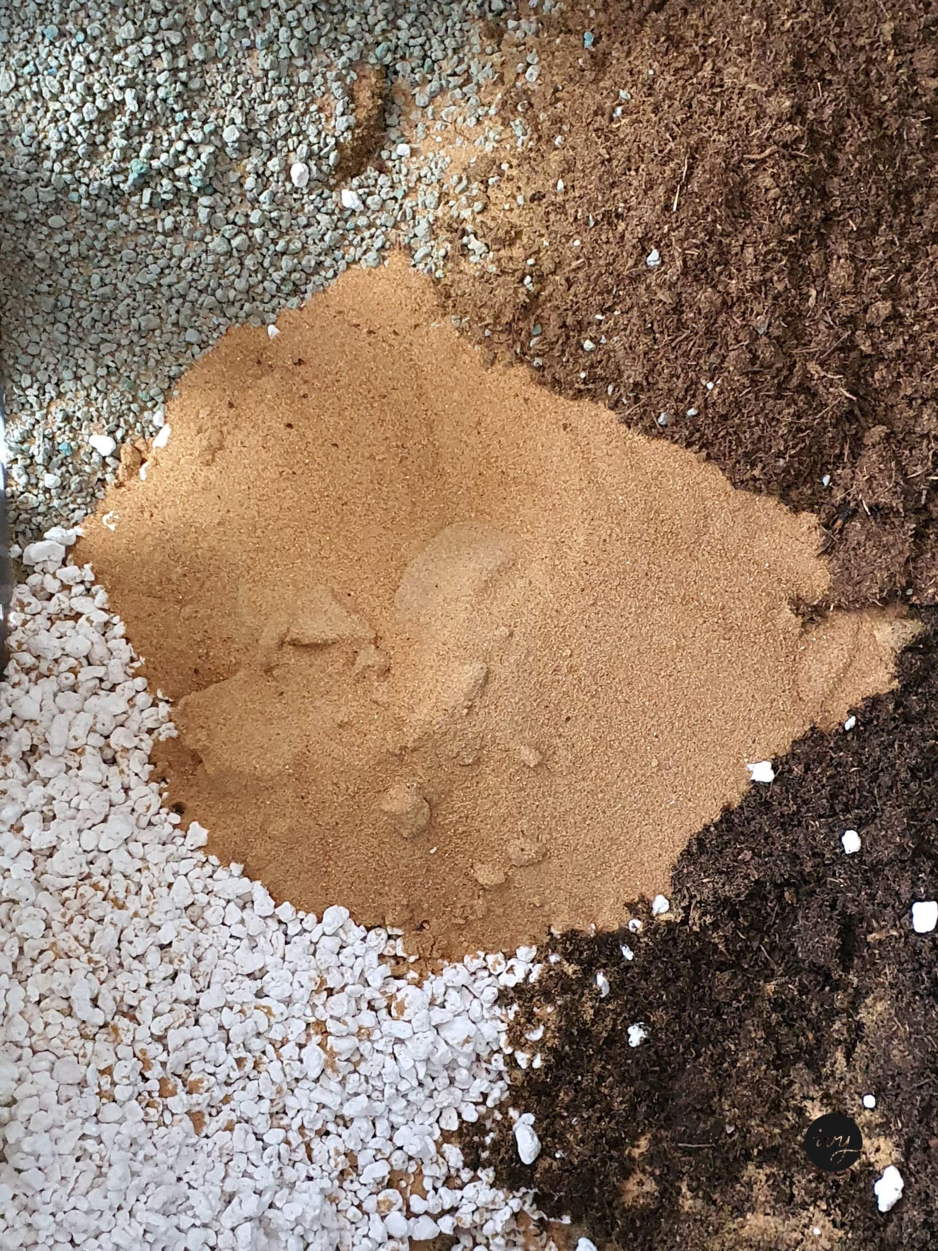 Organic cactus/ succulent potting soil