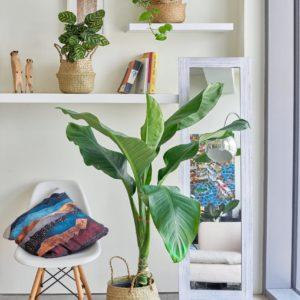 Living room bundle-Bali Jungle